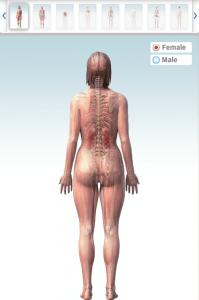 animatie 3D a corpului uman - femeie -spate